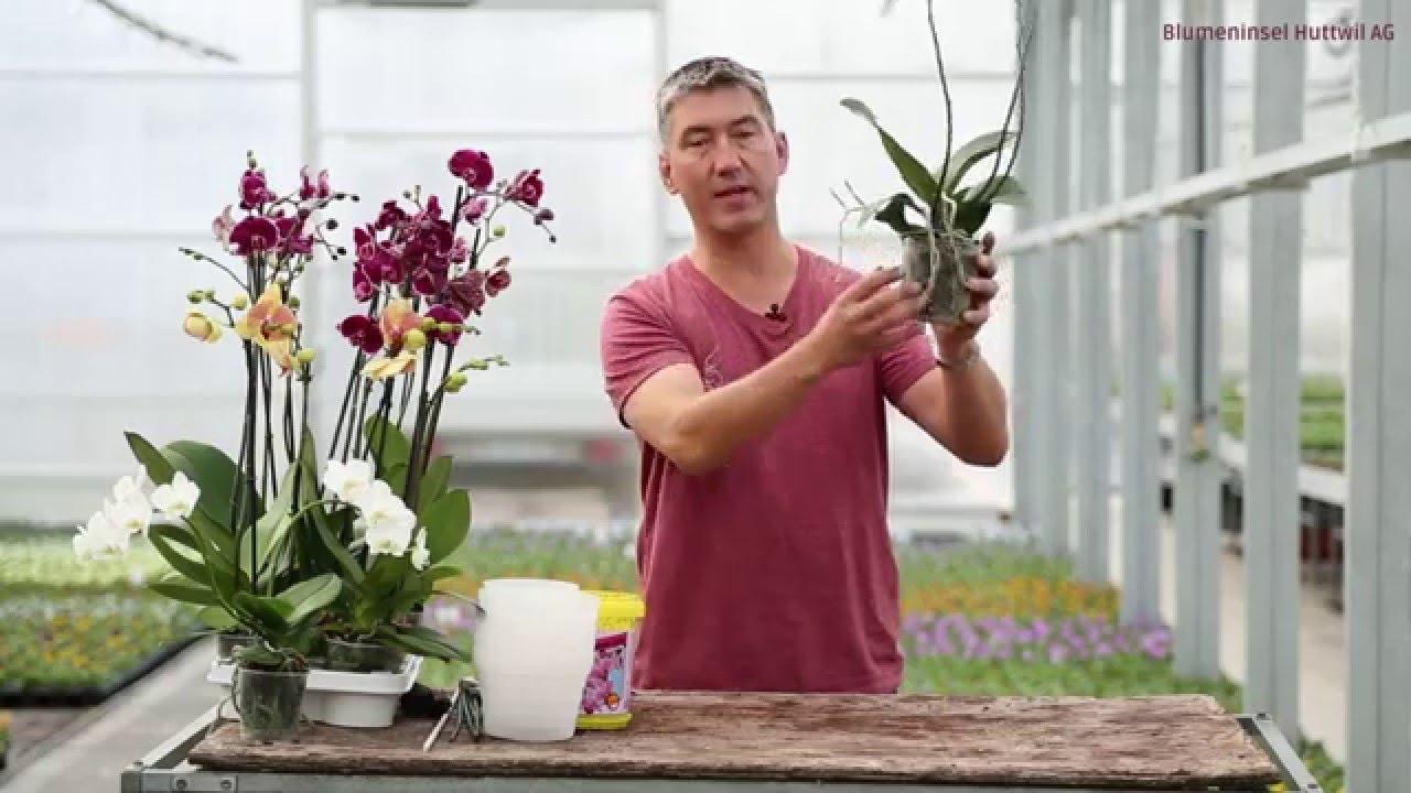 Orchideenpflege Youtube