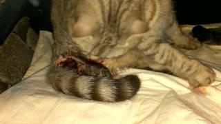 Роды кошки Кошка родила котят Ютуб видео 2019