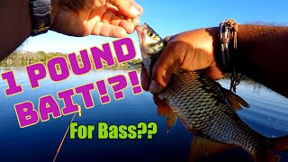 Fishing with the BIGGEST LIVE BAIT EVER!! Catches HUGE TROPHY BASS!!