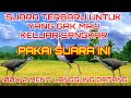 Suara Ruak Ruak Siang Malam Paling Ampuh Bu Ja Pa Nusantara  Mp3 - Mp4 Download