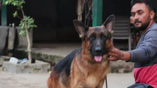 Bhinder Farm || Legend Of Breeding Gsd & Marwari Horses || A.I.S BHINDER || SCOOBERS