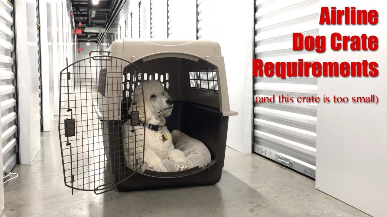 Flying Overseas With Your Dog Crate