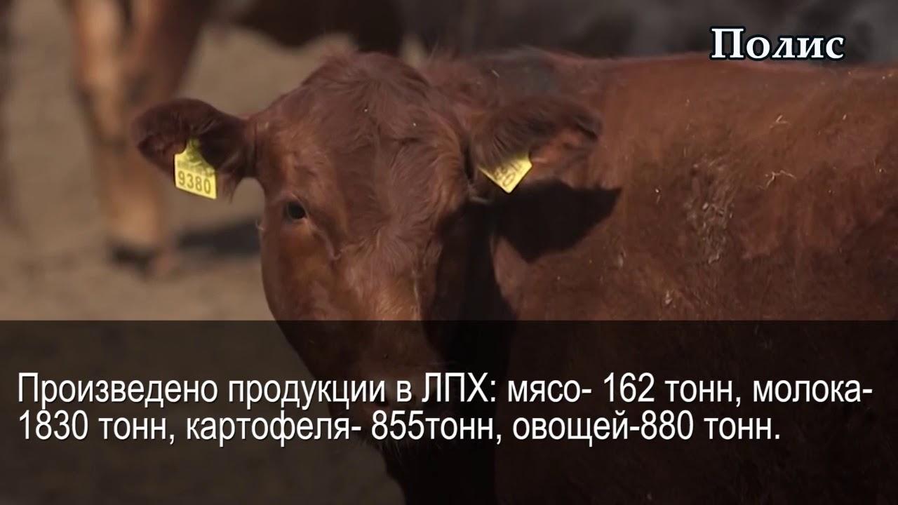 Николенское сельское поселение