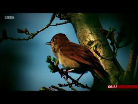 Sam Lee Singing With Nightingales : BBC Breakfast TV 2.5.17