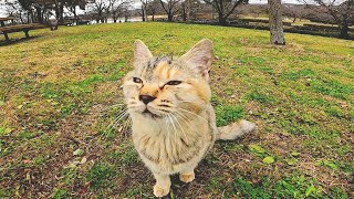 The cats in the park who ride on your lap as soon as you sit down are too cute