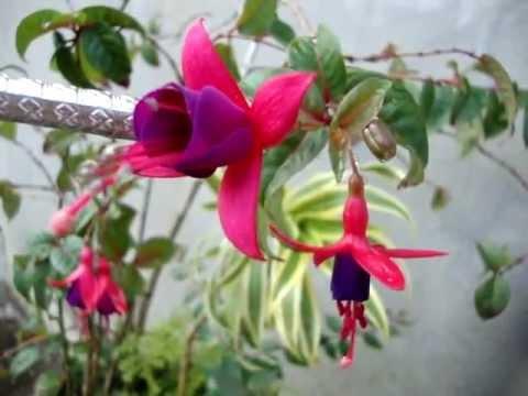 Flor de saudade the girl from ipanema pmv - 3 part 8