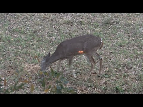Ultimate Hunting Video - 150 Shots In 3 Minutes