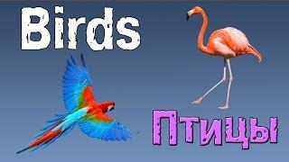 Английский для детей. Животные на английском языке.(птицы на английском).