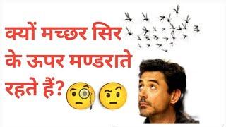 Why Do Mosquitoes Fly Around Our Head | Sar par Machar Kyu Mandrate hai