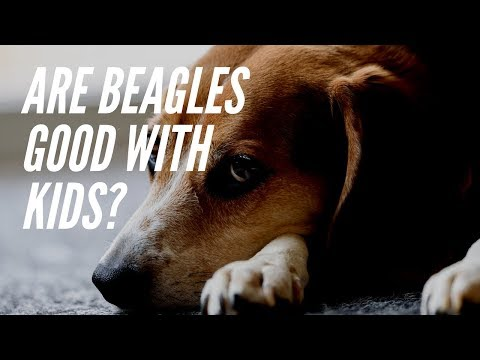 Are Beagles Good With Kids? Why Beagles are Perfect Family Dogs
