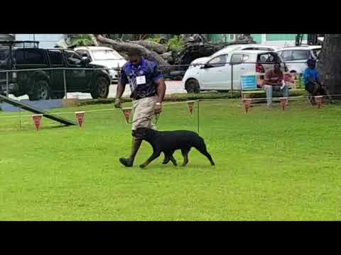 October 2017 Barbados Kennel Club Championship Show