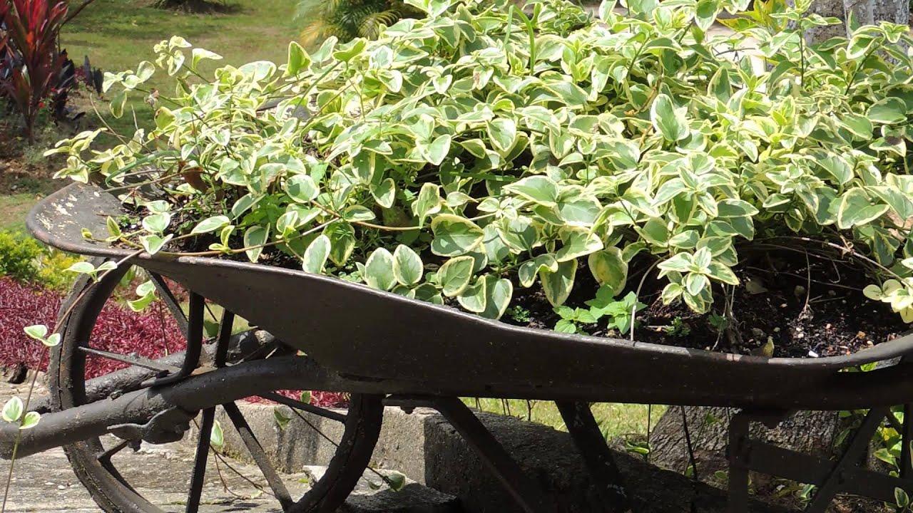7121 carreta con plantas ba ada por el sol raw for Como criar caracoles de jardin