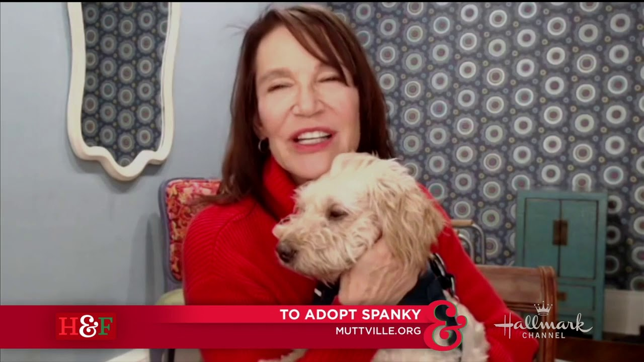 Spanky the Senior Poodle Mix in CA