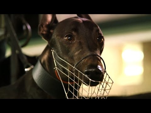 'Dark Side' Of Australian Greyhound Racing Prompts Shutdown