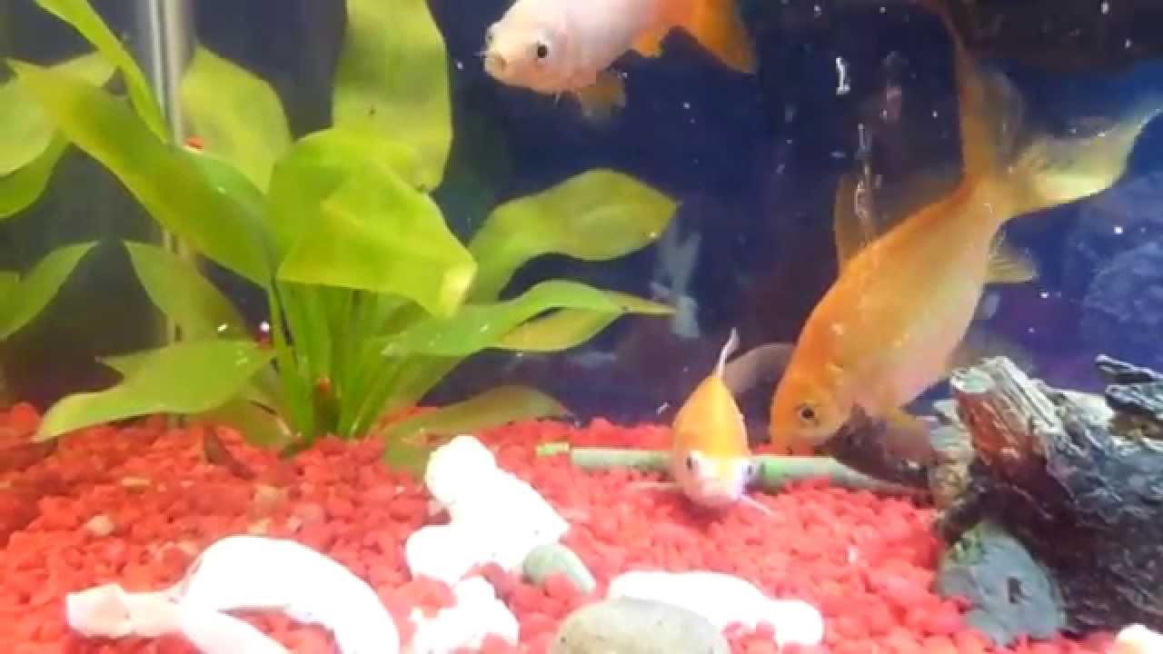 Рыба выпрыгнула из аквариума... USA.Spokane.