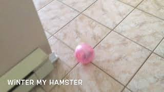 Winter( Hamster) Walking Time ....