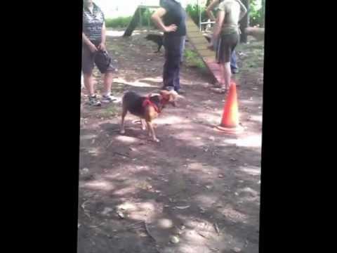 Incontro del 30/06/2012_Video 3