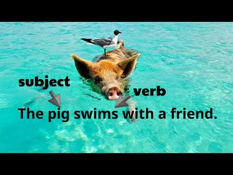 Sentence Fragments For Elementary Students | Classroom Video