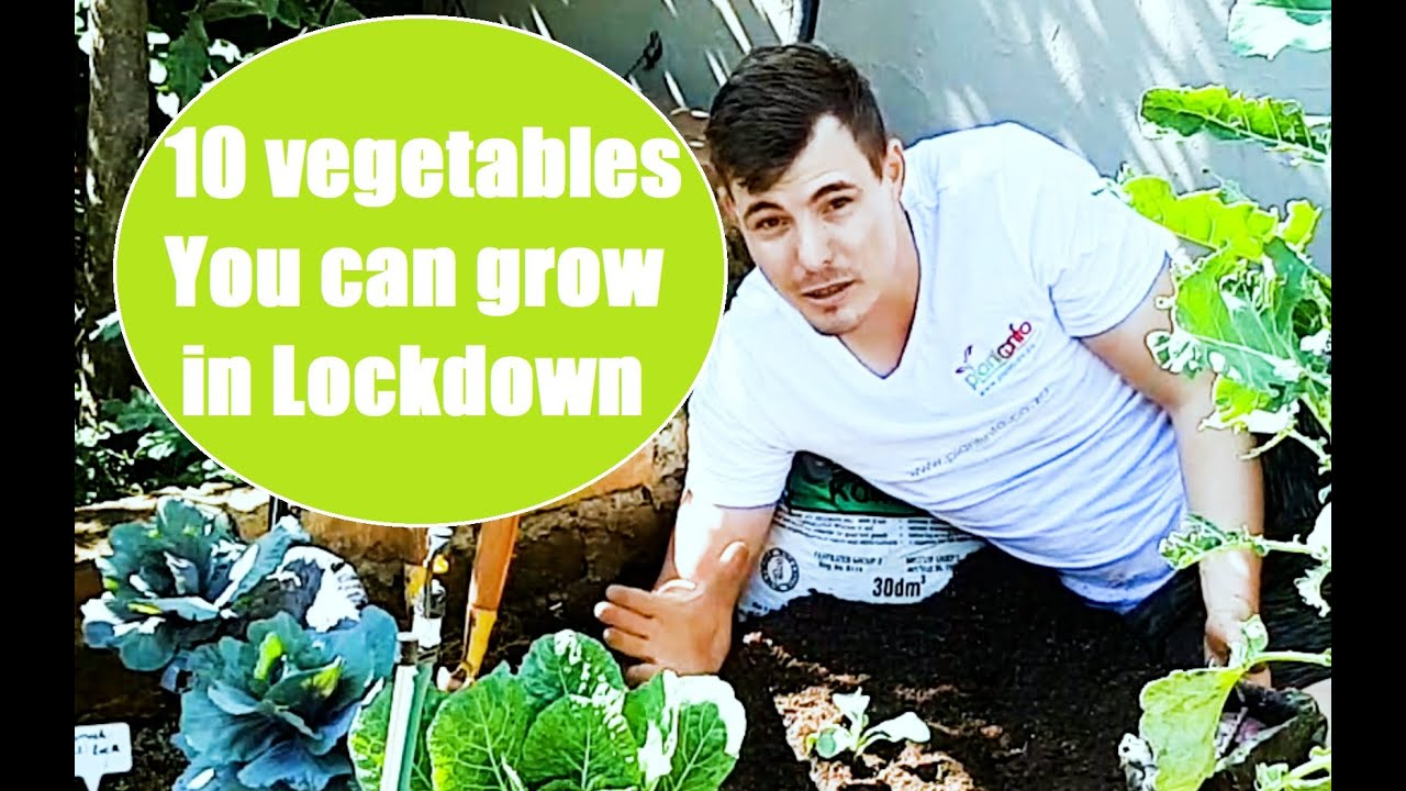 10 Vegetables You Can Grow In Lockdown What To Plant In The