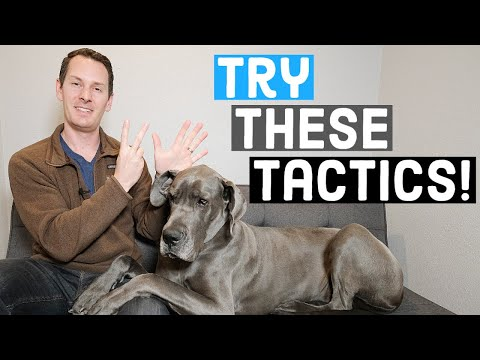 7 UNCOMMON ways to socialize your Great Dane | Great Dane Care