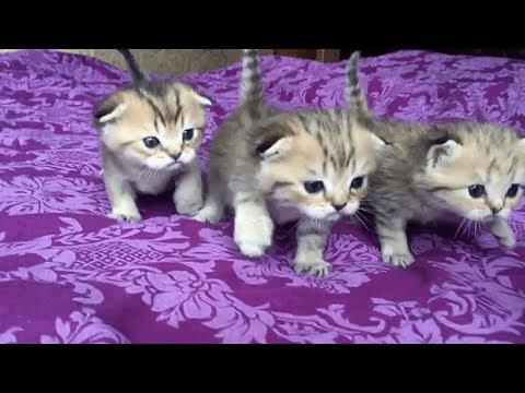 Tiny Kittens Will Cheer You Up | Fun With Cat
