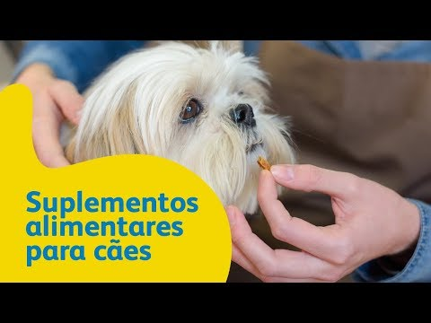 Suplementos alimentares para cães