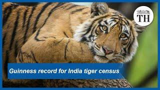 India's 2018 tiger census sets world record