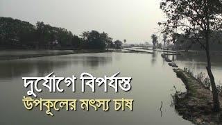 দুর্যোগে বিপর্যস্ত উপকূলের মৎস্য চাষ | bdnews24.com