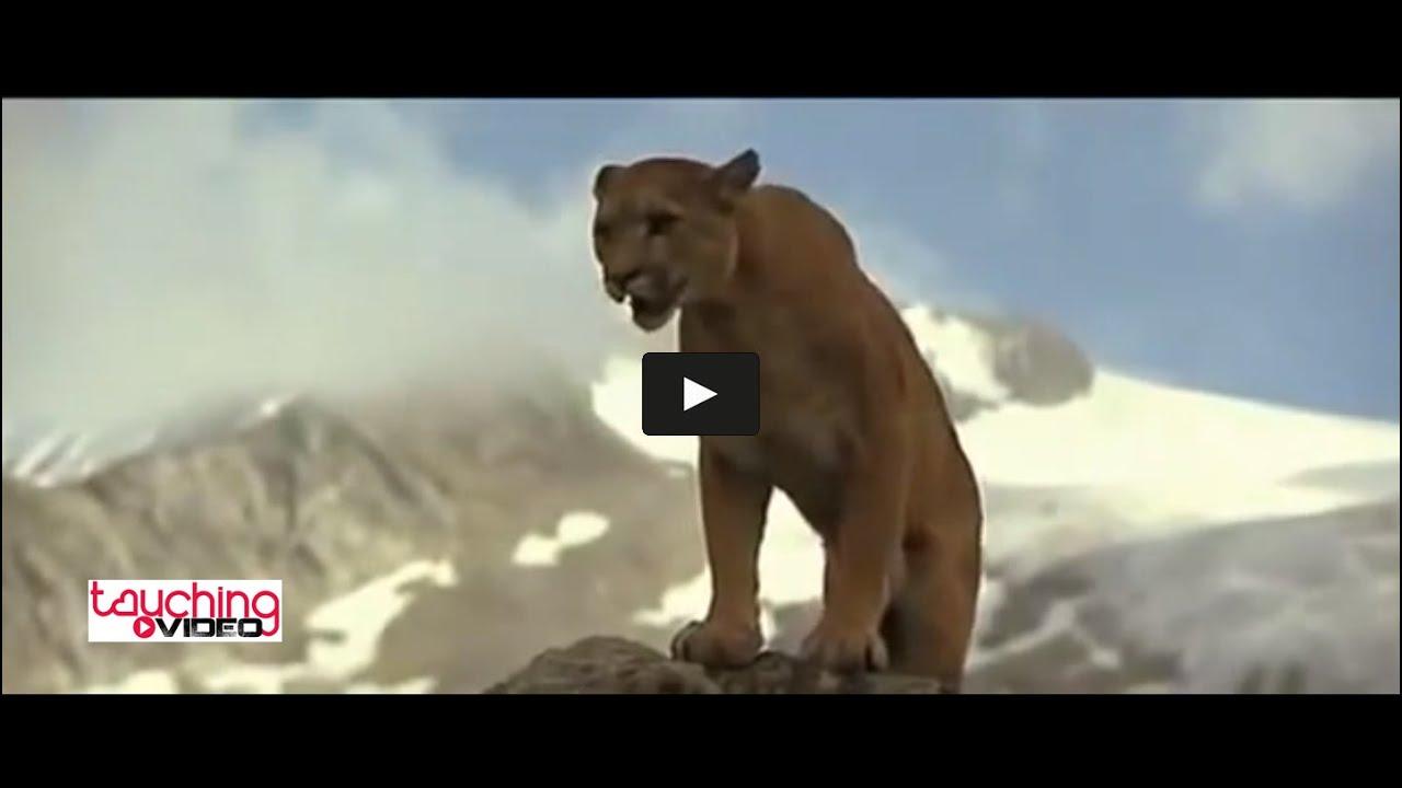 Cougar oursons site de rencontre gratuit rencontres Philippines