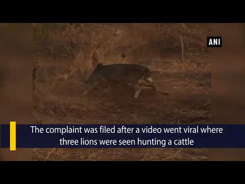10 arrested for organizing lion show in Gir Forest