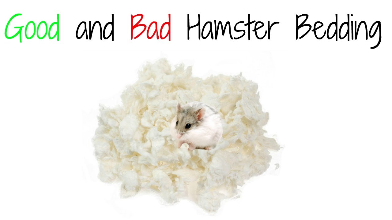 and animal bed bedding hamsters shop hamster gerbil carefresh confetti gerbils omlet