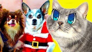 Кот Макс завидует Magic Family. Кошка и питомцы в новом доме первый день