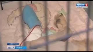 В полиции Кемерова озвучили итоги проверки истории собаки, замурованной в будке