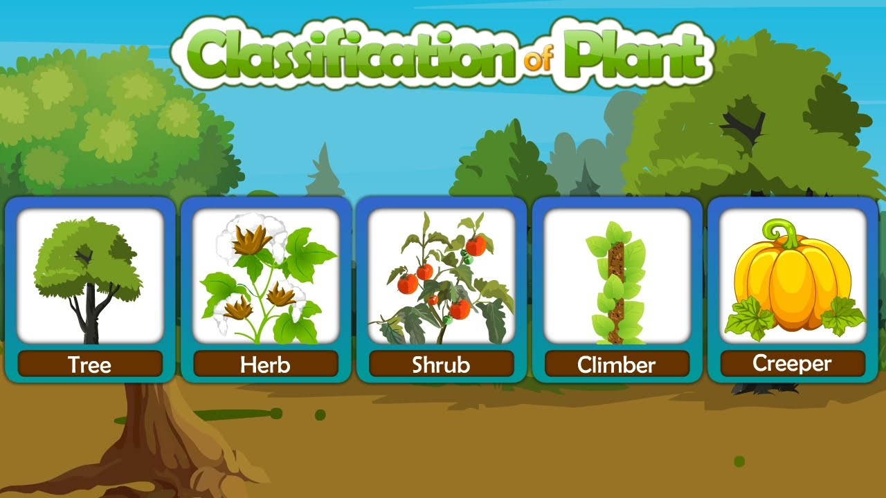 classification of plants on our earth like tree herb shrubs etc