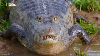 Светът на дивото - Амазонската дъждовна гора Бг Аудио
