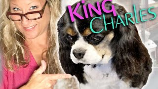 Perfectly GROOM your KING CHARLES CAVALIER SPANIEL at HOME Step By Step LESSON