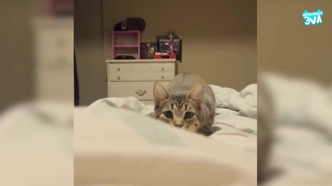 Говорящие, коты, и Кошки