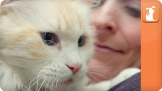 Cat Connection - Cats for Families