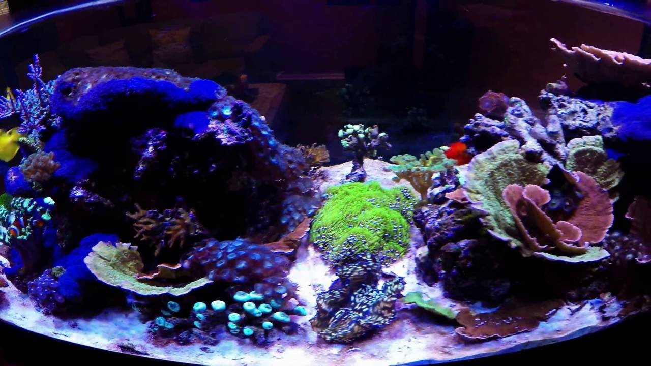 Seapora 80 Gallon Reef Ready Lagoon - Episode 1