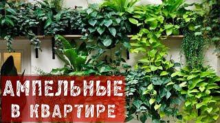 ФАЗЕНДА - 2015.02.01 - Фрагмент 99.