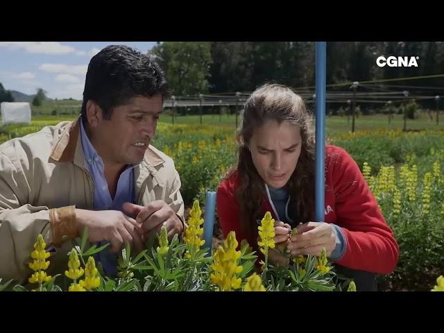 CGNA, Ciencia en Plantas