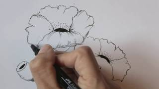 how to draw flowers for beginners- easy version poppy flowers (version 2)