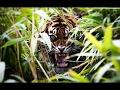 Jungle Deep In The Jungle