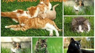 Про котов и кошек видео. Фото котов и кошек.