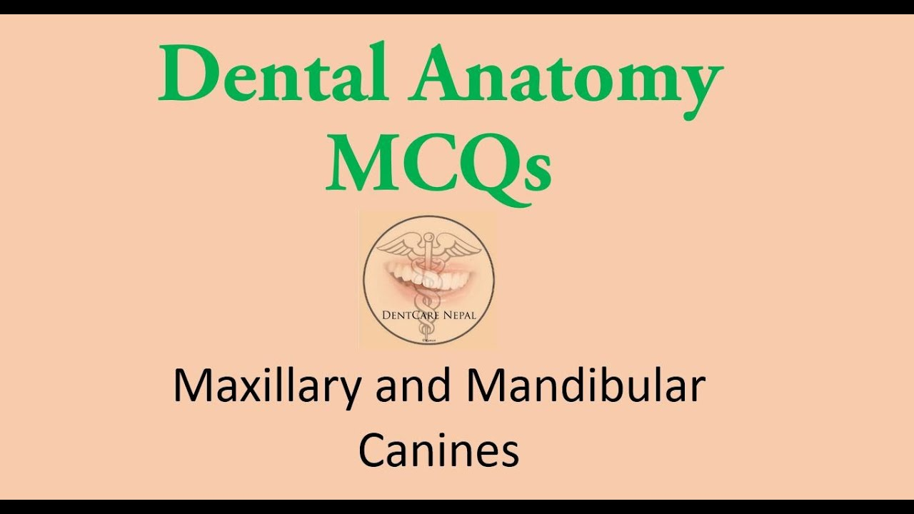 Maxillary Canine And Mandibular Canine Dentistry Mcqs For Nbde Ndeb