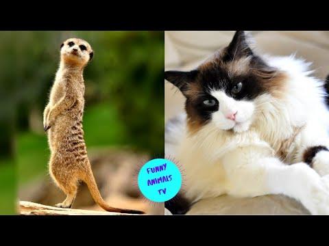 Приколы с животными | Смешные Животные | Лучшие Приколы | Смешные Коты Кошки Funny Cats  (36)