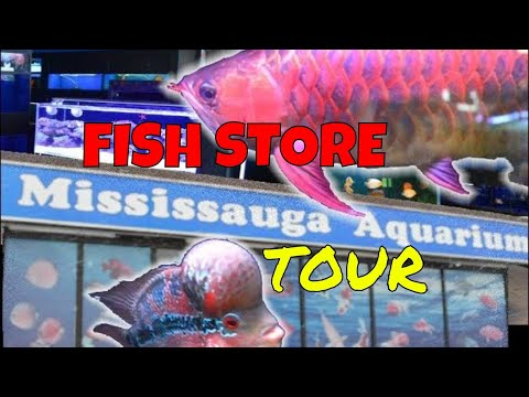 Fish Store Tour Of Mississauga Aquariums | Flowerhorn & Discus Cichlid Shop Remastered