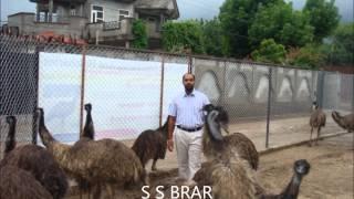 dog kennel in india dog kennel punjab emu farming punjab sirsa haryana uttrakhand up emu farming