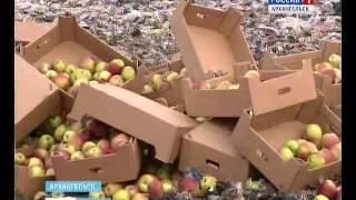 В Архангельске уничтожили полторы тонны санкционных польских яблок(, 2016-11-02T18:40:04.000Z)