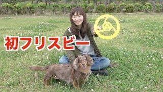 愛犬の公園散歩がてらはじめてのフリスビーに挑戦!!犬のおもちゃいろい...